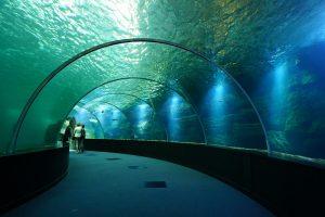 Le tunnel à Nausicaa