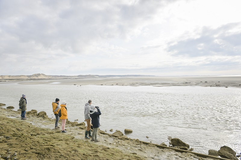 Les phoques en Baie d'Authie